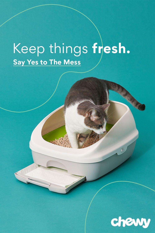 Tidy Cats Breeze Cat Litter Box System Cat Litter Box Tidy Cats Litter Box