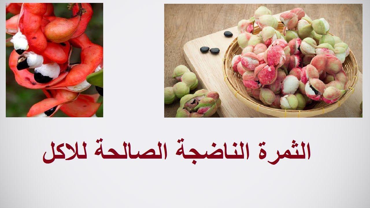 طرق زراعة اللوز الهندى و الاستفادة منه Pithecellobium حلقة 379 Vegetables Plants Radish