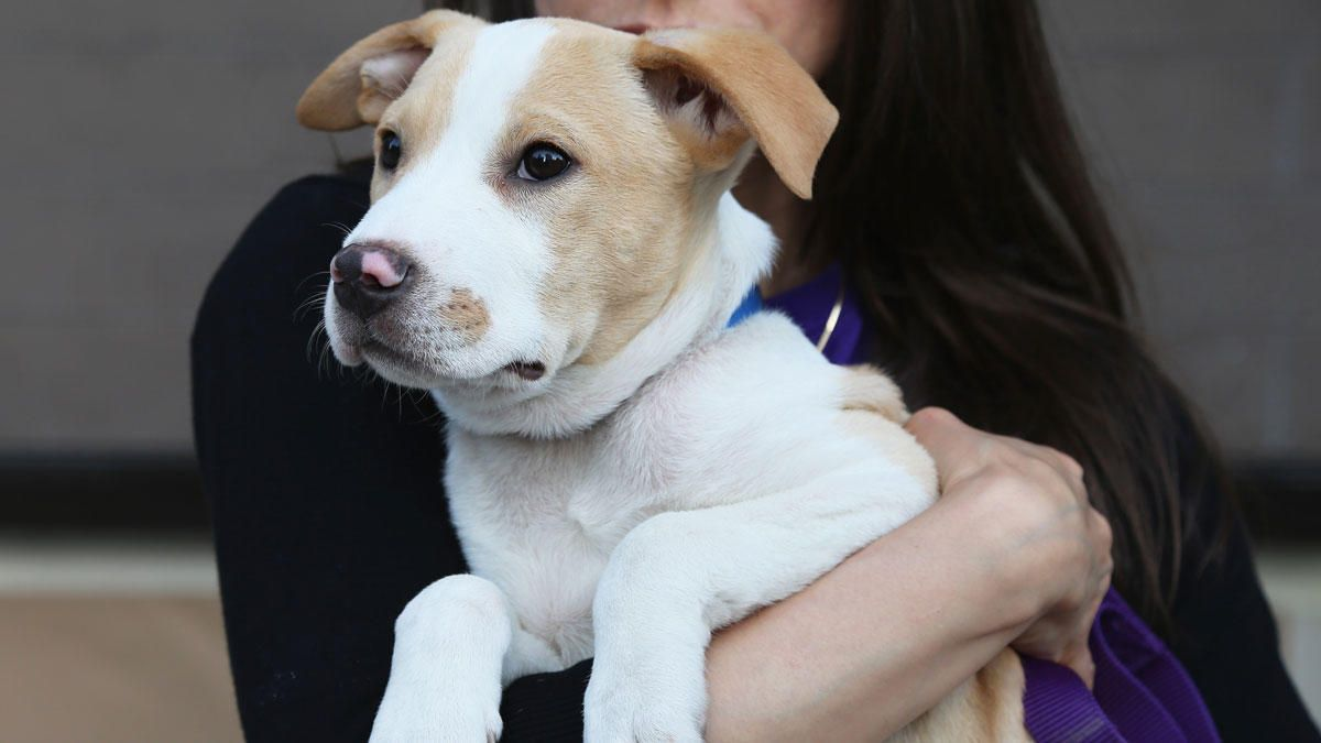 puppy socialization classes nyc