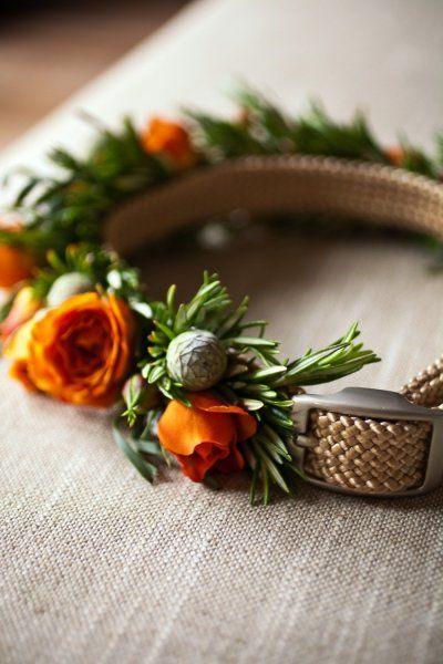 #collar #forthefurryguests Photography by catherinehall.net Wedding Coordination by offthebeatenpathweddings.com Floral Design by ericarosedesign.com  Read more - http://www.stylemepretty.com/2012/07/17/napa-wedding-by-catherine-hall-studios/