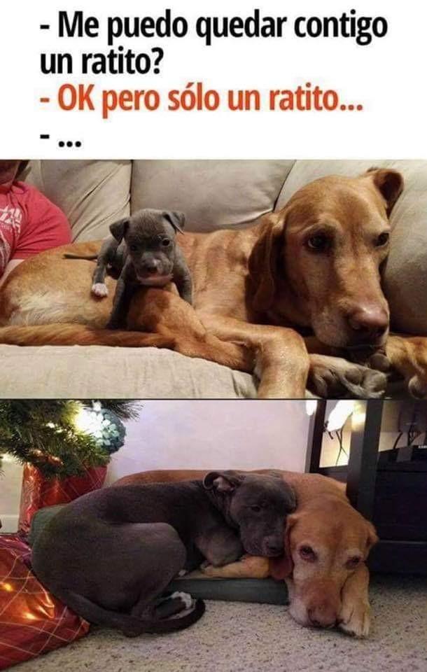 Amigos Expertoanimal Mundoanimal Reinoanimal Animales Naturaleza Mascotas Animalesdecompani Memes Perros Memes De Perros Chistosos Chistes De Perros