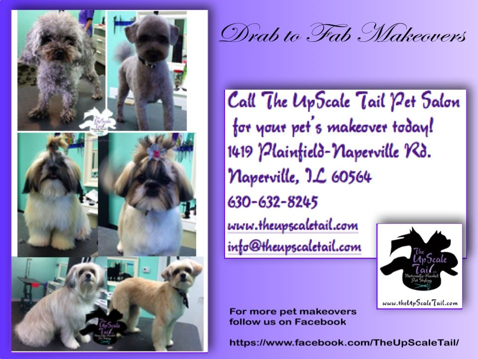 Pin By The Upscale Tail Pet Grooming On Pet Grooming Makeovers For Dogs And Cats Pet Grooming Salon Cat Grooming Creative Grooming