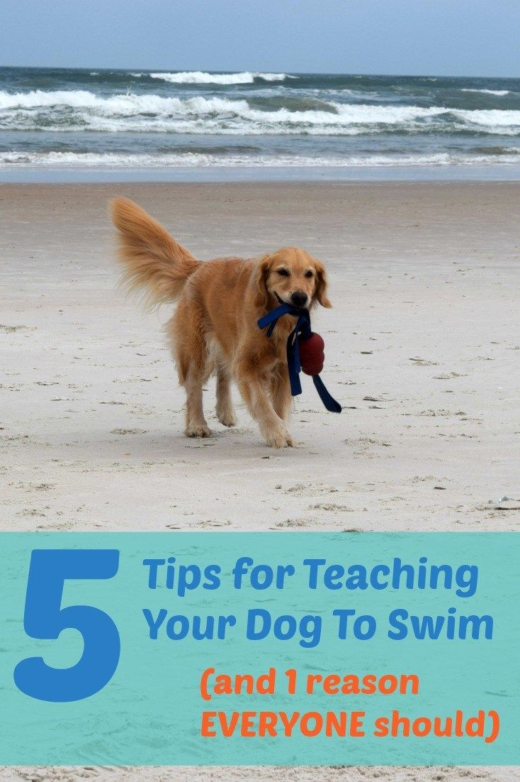 5 tips to teach your dog to swim and 1 reason everyone