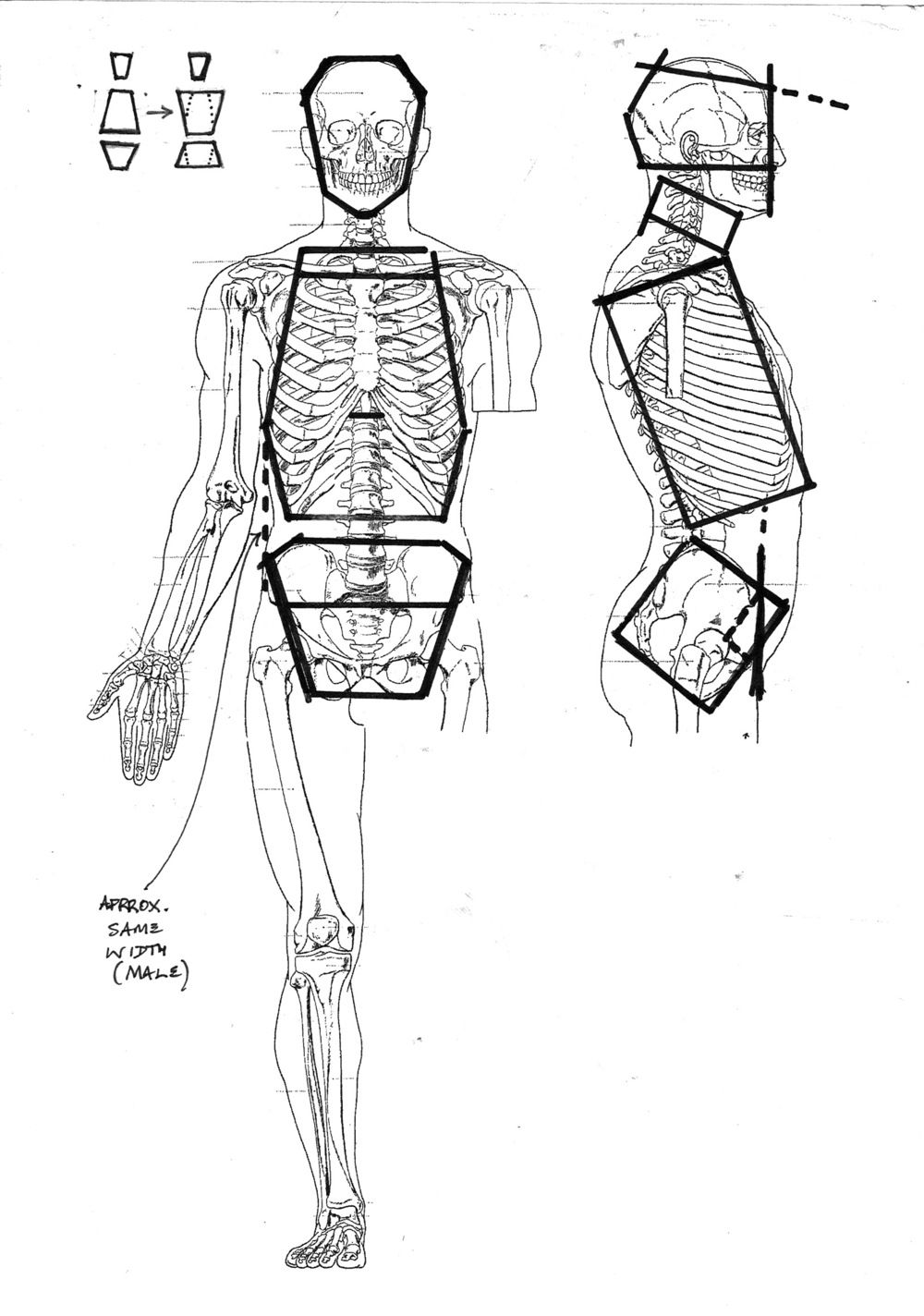 Rib Cage Bammes Google Search In 2018 Pinterest