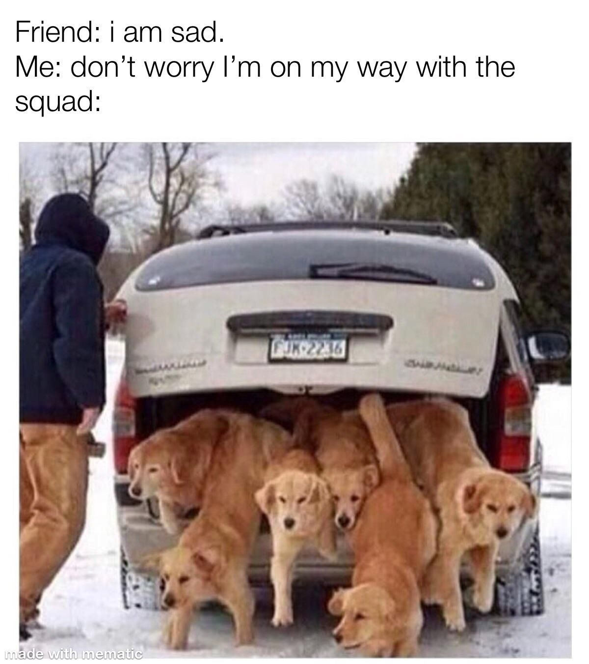 Get In Loser Well Cheer You Up Https Ift Tt 37r3a3c Cute Animal Memes Funny Dog Memes Dog Memes