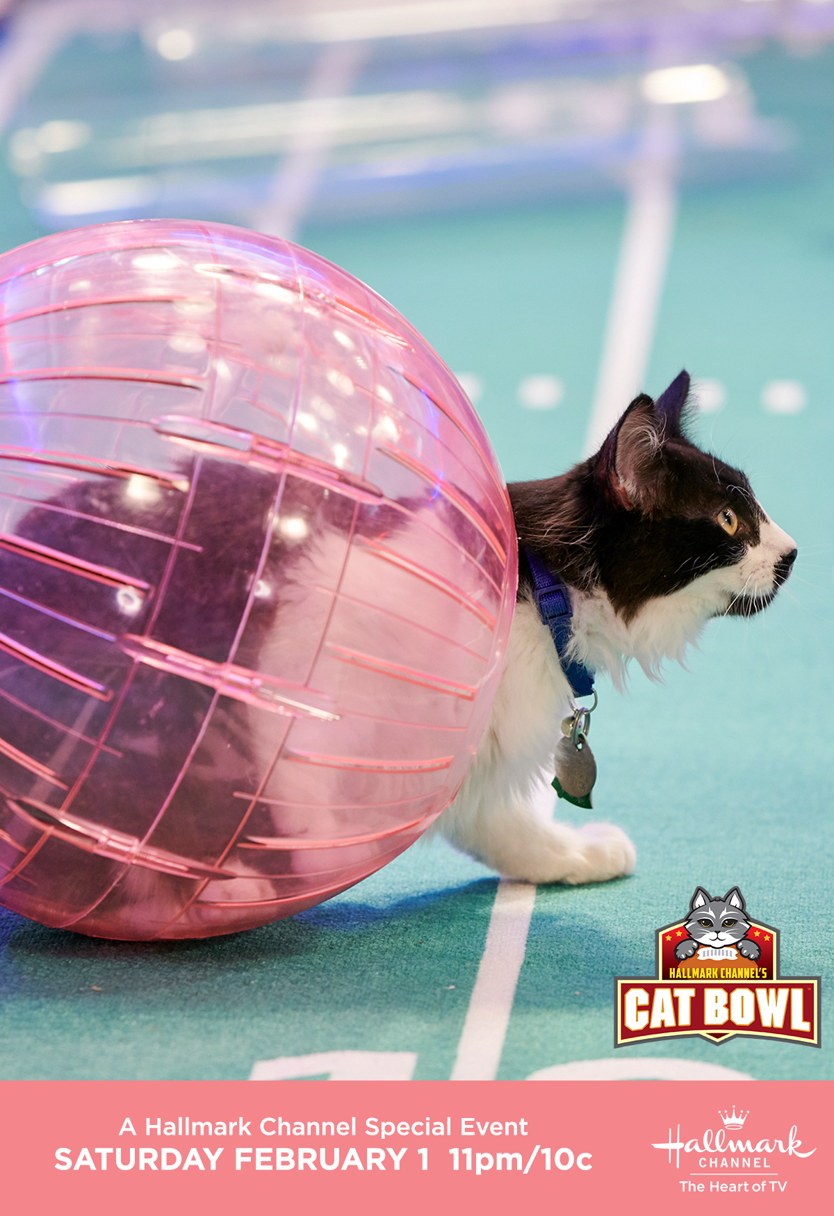 It S An Adoption Ever After Weekend As We Get The Ball Rollin With Cat Bowl Ii On February 1 Only On Hallmark Channel Catbowl In 2020 Cat Bowls Kitten Bowls Kitten