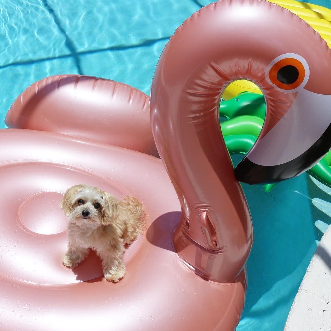 Sunnylife 174 Flamingo Pool Float Seasons Pool Toys