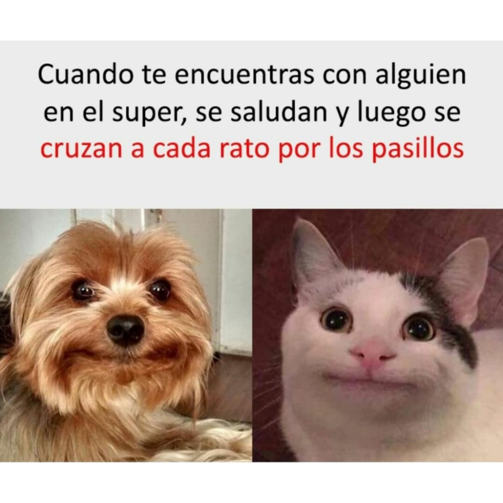 Un Meme De Super Mercado Memes Graciosos Memes De Risa Mascotas Memes Memes De Perros Chistosos