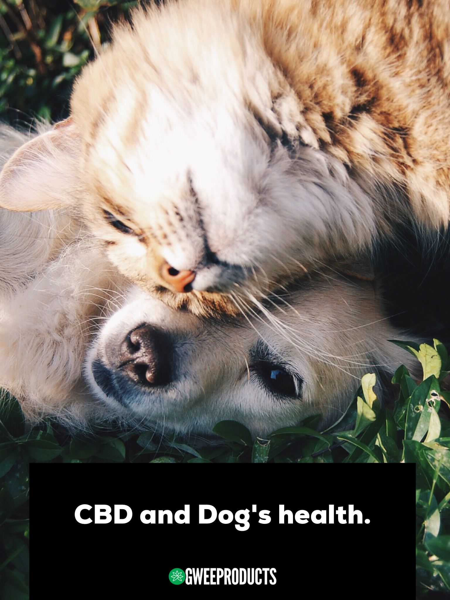 Photo of CBD and Dog's health