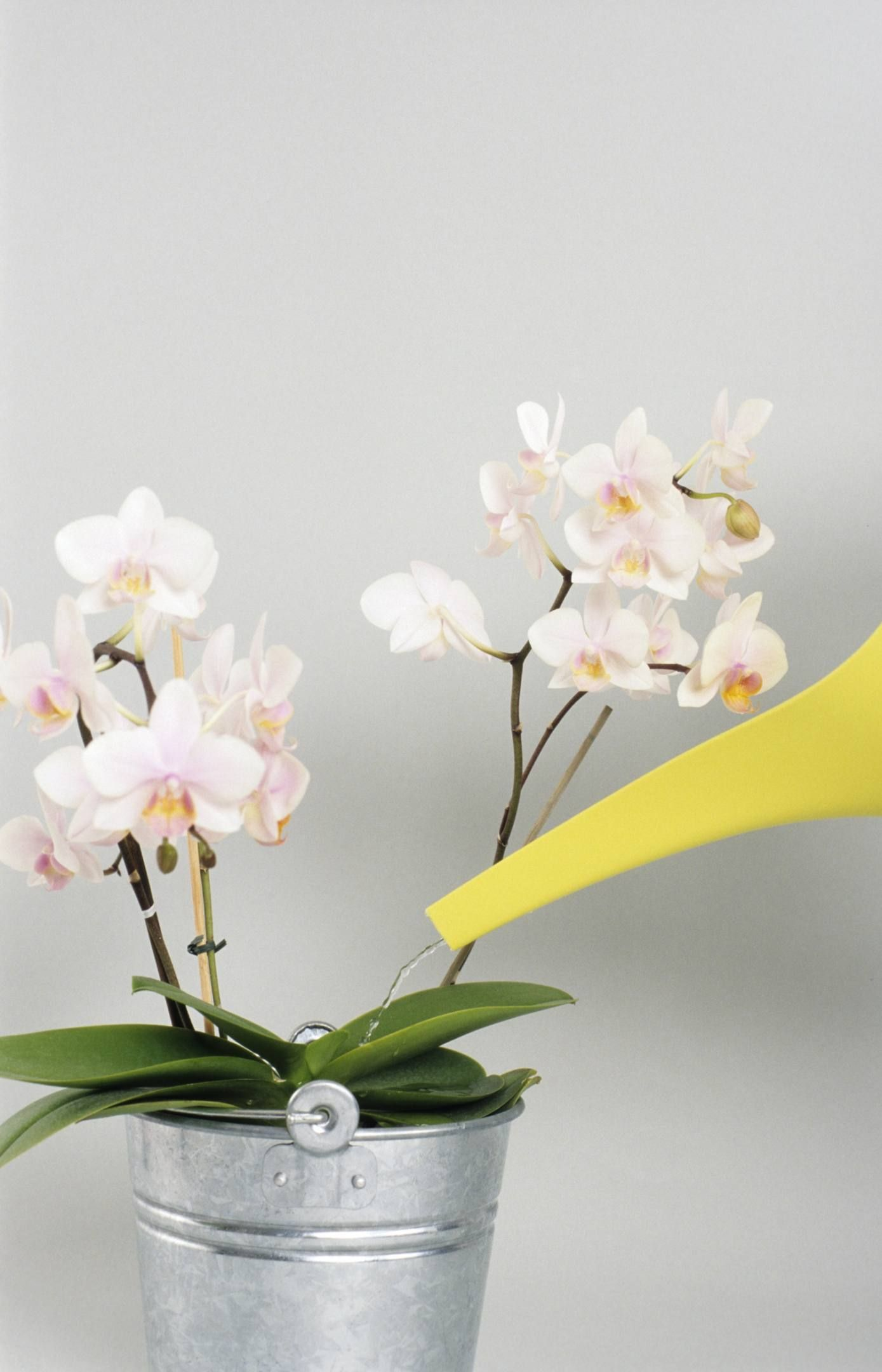 Discover common reasons why an orchid wont bloom and how