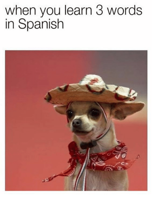 When You Learn 3 Words In Spanish Spanish Meme On Me Me Funny Animal Memes Animal Memes Funny Animal Jokes