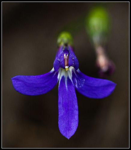 Pin Su Flower Essences