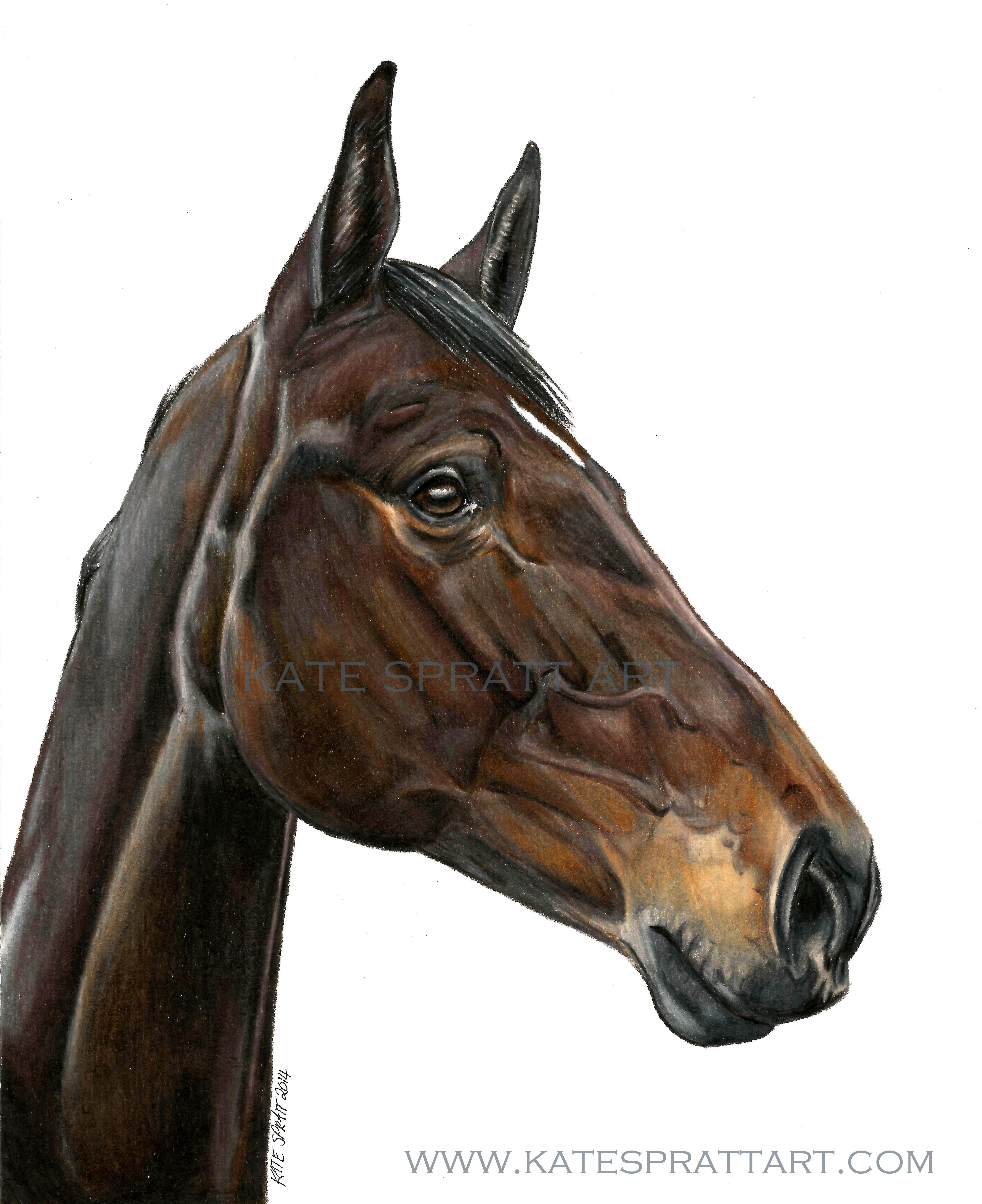 a4 using fabercastell polychromos  horse art  pinterest