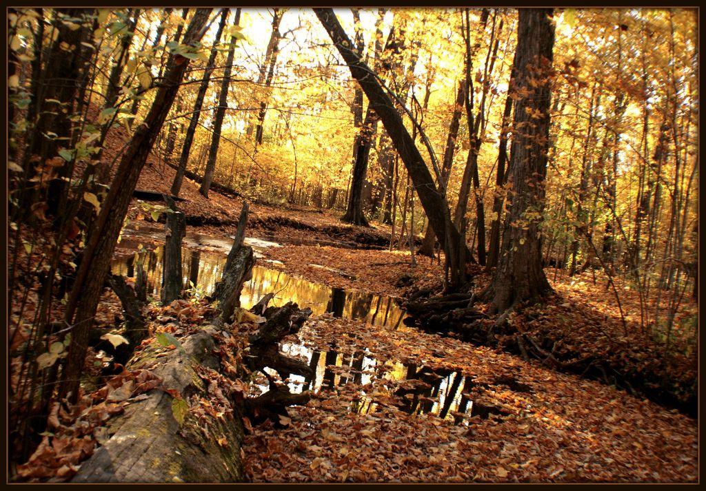 Hobbs woods fond du lac