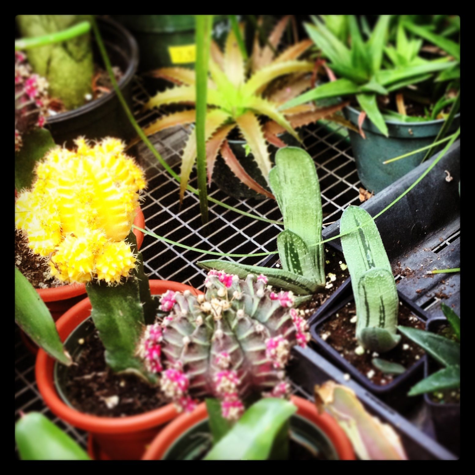 Para mi jardín <3
