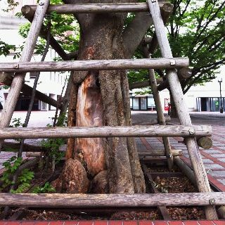 A zelkova. We keep you from a storm. 欅。東京にて。
