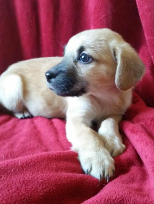 Adopt Ouiser On Hound Dog Dogs Pugs