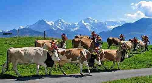 The diversity of Switzerland Culture | About Switzerland ...