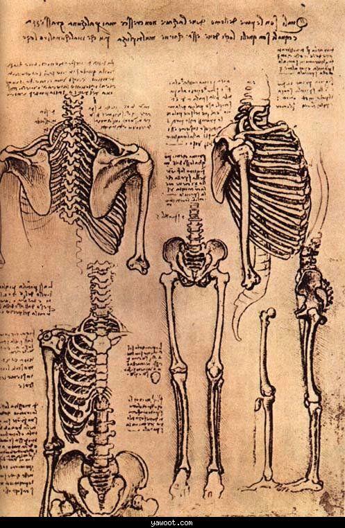 Anatomical sketches of Leonardo di ser Piero da Vinci (Italian, 1452-1519)