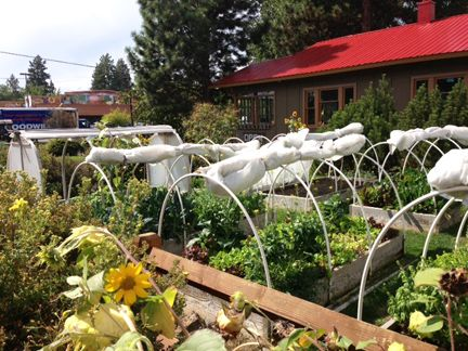 Growing Their Own Here S What 7 Bend Restaurants Are Harvesting From Their On Site Gardens And Serving Up Fresh For You With Images Oregon Road Trip Oregon Travel Oregon Living