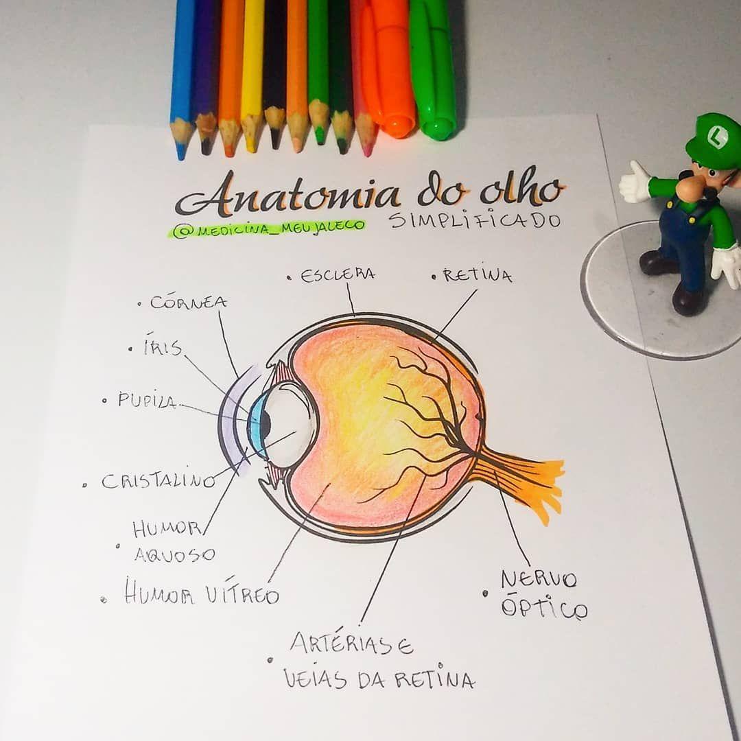 Pin Em Anatomia 2