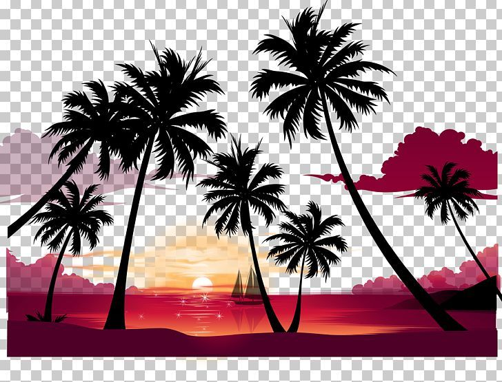 Display Resolution Summer Png Arecaceae Background Vector Beach Vector Borassus Flabelli Tree Silhouette Sunset Iphone Wallpaper Winter Computer Wallpaper