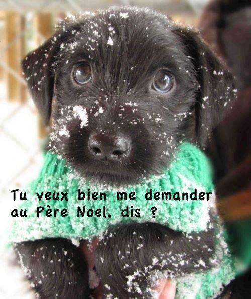 Un chien pour Noël :) #PereNoel #cadeau #noel #chien #chiot