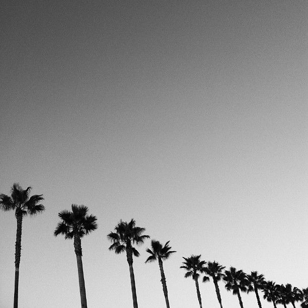 You're My Obsession palm trees photography black