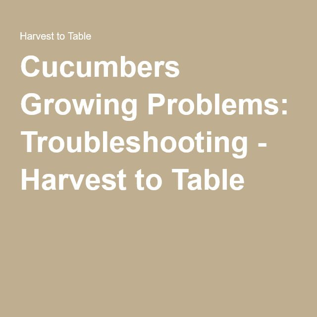 Cucumbers Growing Problems: Troubleshooting - Harvest to Table