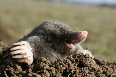 some people hate moles. I think there  awsometacular.