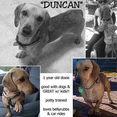 Adopt Duncan Va On Petfinder Animal Snacks Hound Breeds