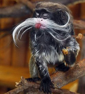 15 Animals With Better Mustaches Than You Will Ever Grow Cute