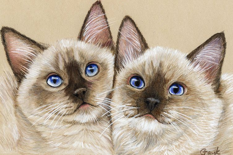 Красивые рисунки кошек и котят цветными карандашами