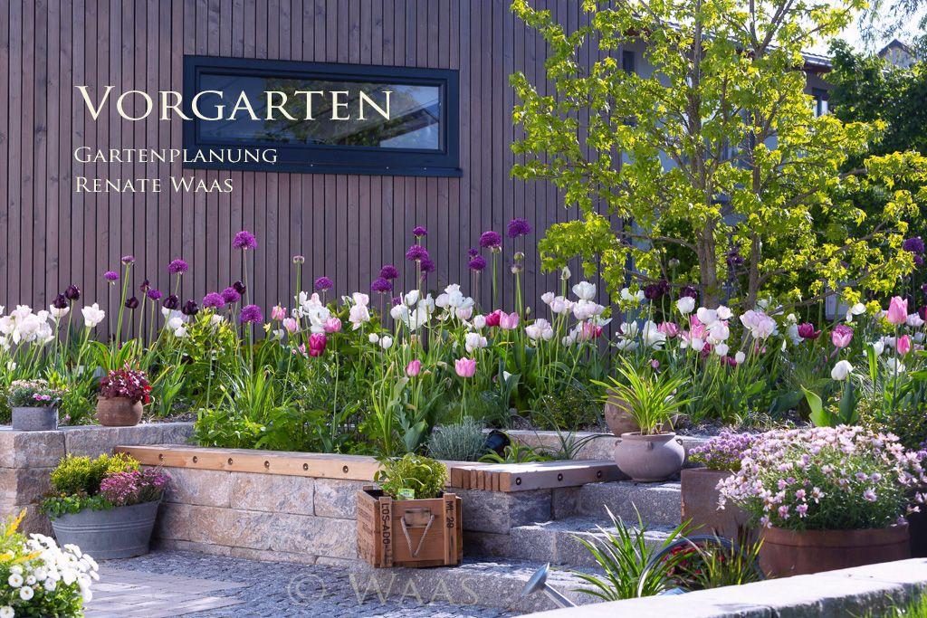 Vorgarten Tulpen Zierlauch Pflaster Vorgarten Garten