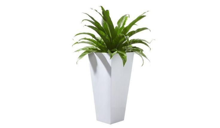 Die Kunststoff Blumentöpfe Cambridge sind in den Farben Weiß und ...