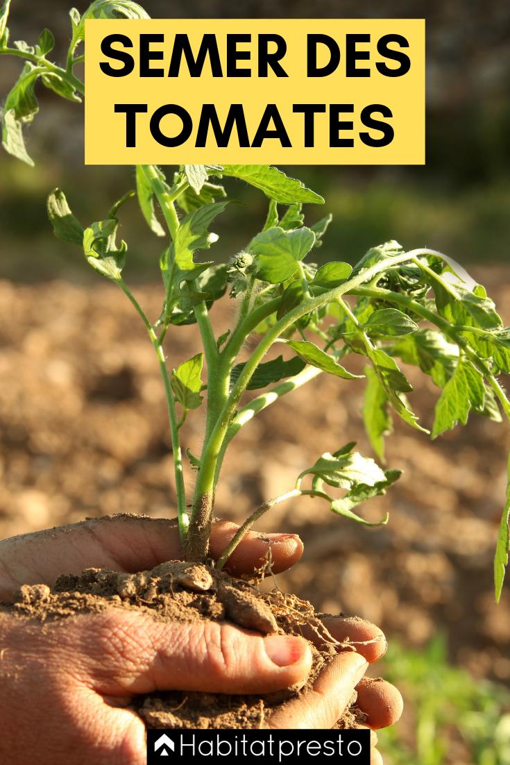 Potager : quand semer et quand planter les tomates ? jardinage, jardin, légumes, fruits, f ...