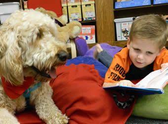 Gibbs A Goldendoodle Became A Registered Delta Society Pet