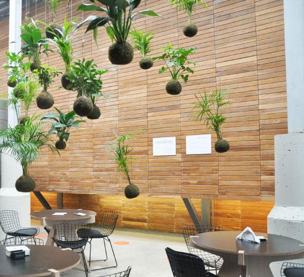 Kokedamas para tu cocina, las plantas sin maceta - Fotografía de
