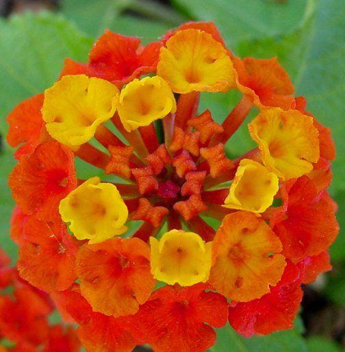 Cura dei fiori delle piante d 39 appartamento e delle for Fiori da esterno