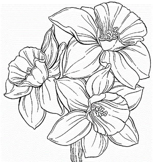 Daffodil Flower Coloring Pages Daffodil Tattoo Pansies Art