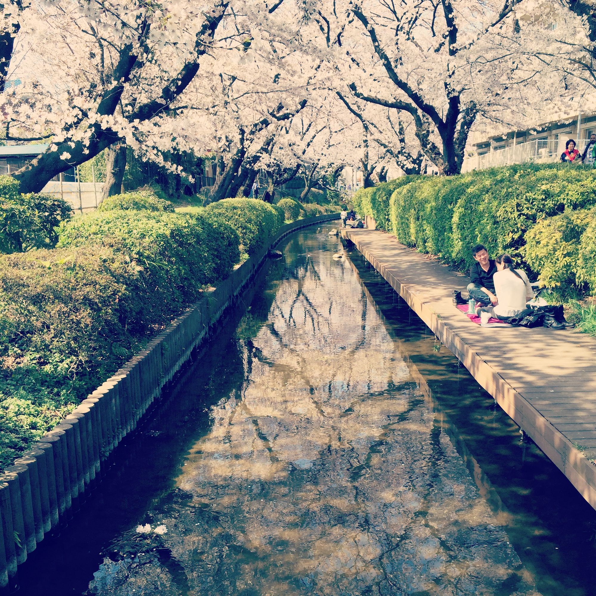 #日常,#日本,#JAPAN,#青空,#sky,#桜,#cherryblossom,#春,#Spring,#花,#flower,#sakura,#