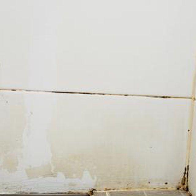 Bathroom Black Mold And Mildew