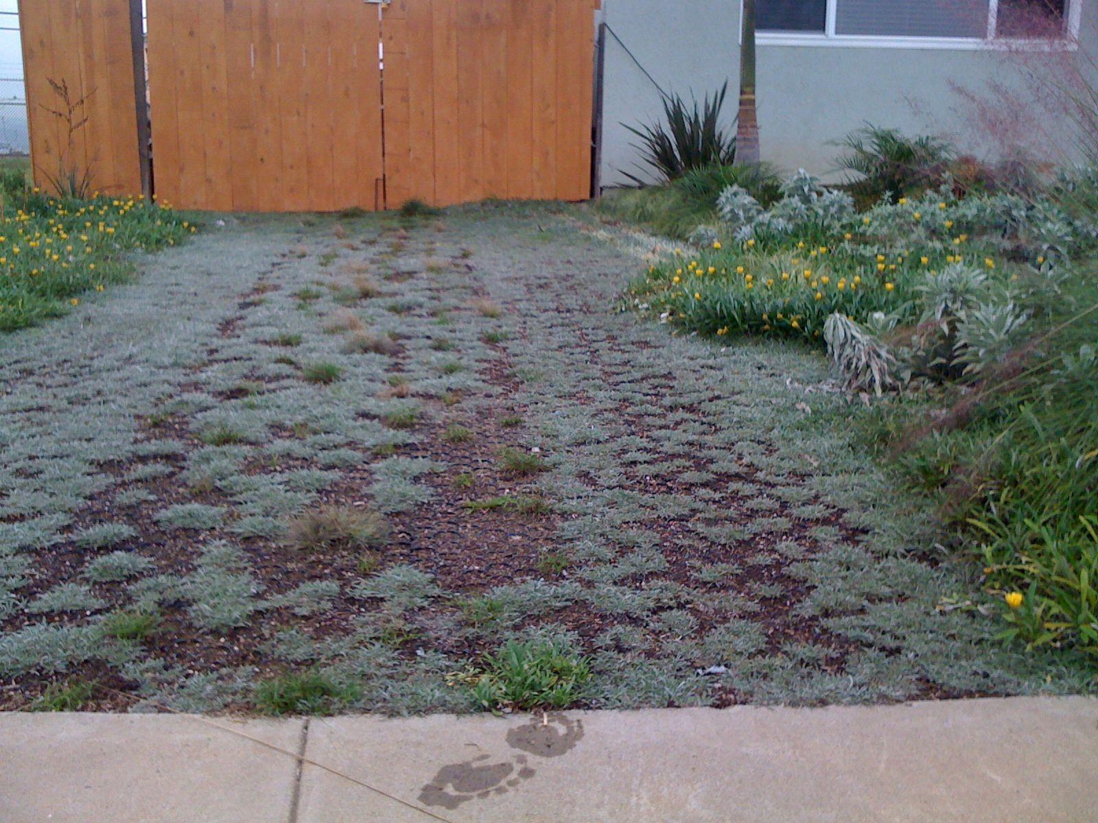 Non-grass and mulch on permeable pavers | Urban garden ... on Non Grass Backyard Ideas id=67945