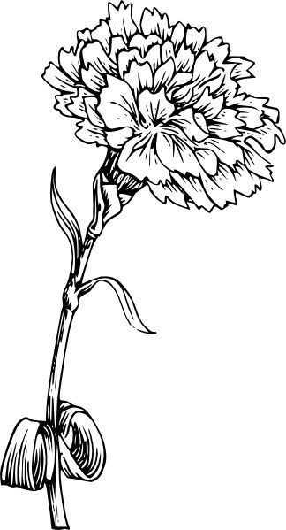 Carnation Flower Drawing Vector Image On Vectorstock Carnation Drawing Flower Drawing Flower Line Drawings