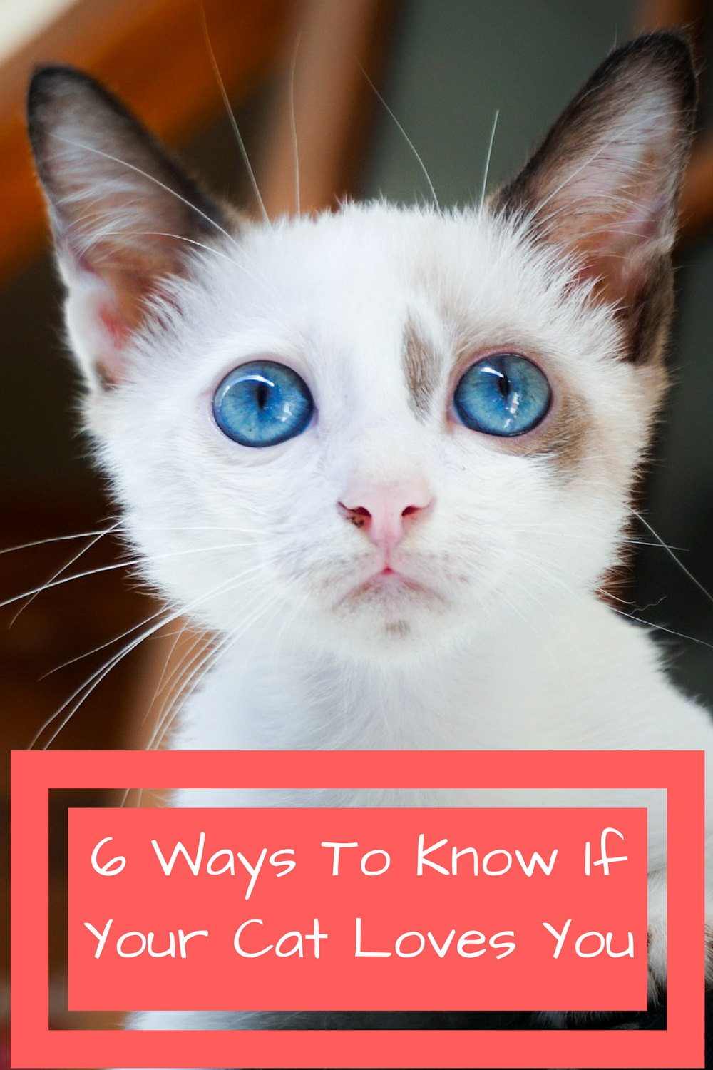 6 ways to know if your cat loves you  http://mobikitty.com/how-to-know-if-your-cat-loves-you/