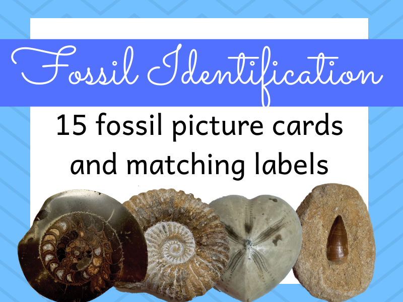 Fossil Identification Activity KS2 | Teaching Resources