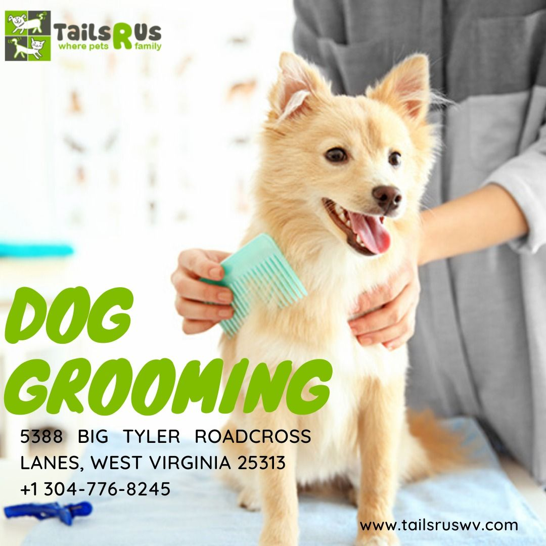 Give Your Pet That Perfect Feeling And Looks With Our Grooming Services It Includes Baths Brush Out Nail Trimming And H In 2020 Dog Grooming Family Pet Family Dogs