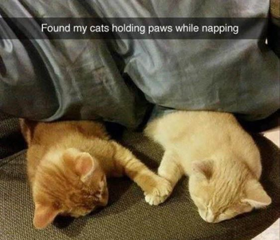 Photo of Nap-otism: 18 Snapchats That Prove Animals Can Sleep Anywhere