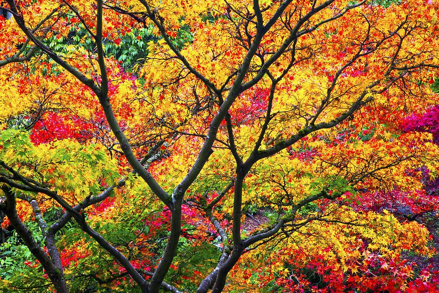 Colorful Photography Autumn Color Photograph Kaleidoscope