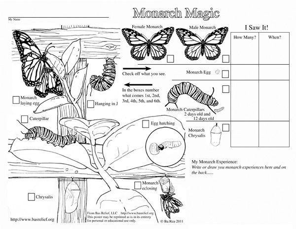 Monarch Magic Coloring Page   MONARCH BUTTERFLIES   Monarch ...